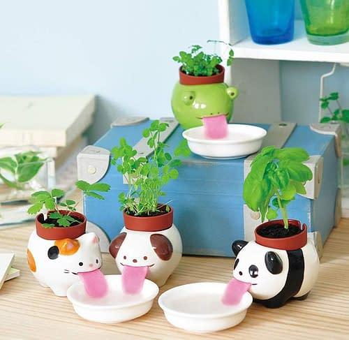 Peropon Panda, vaso e piantina