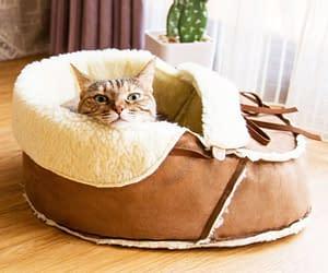 Stanchi del vostro animale da compagnia preferito che vi ruba regolarmente le ciabatte? Fatelo definitivamente contento con questa cuccia a forma di calzare!